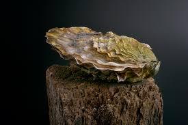 huîtres David Hervé